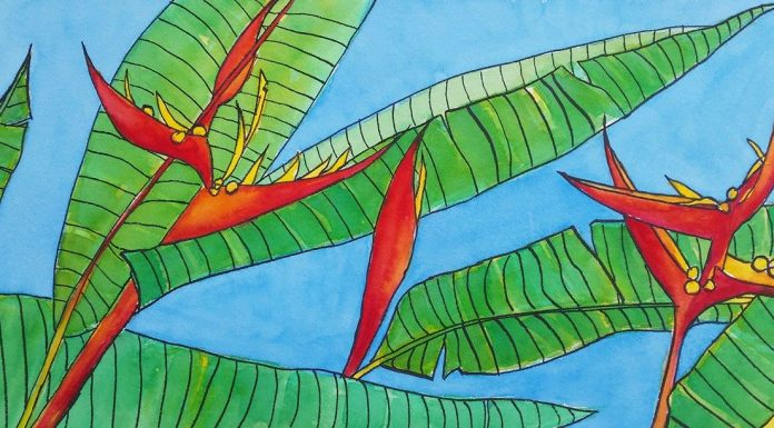 Heliconias in watercolour