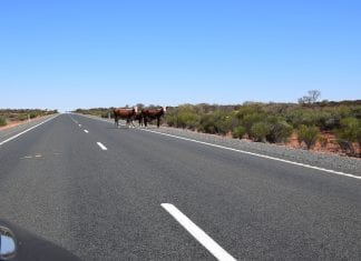 Beware of Livestock - Travel safe in Australia