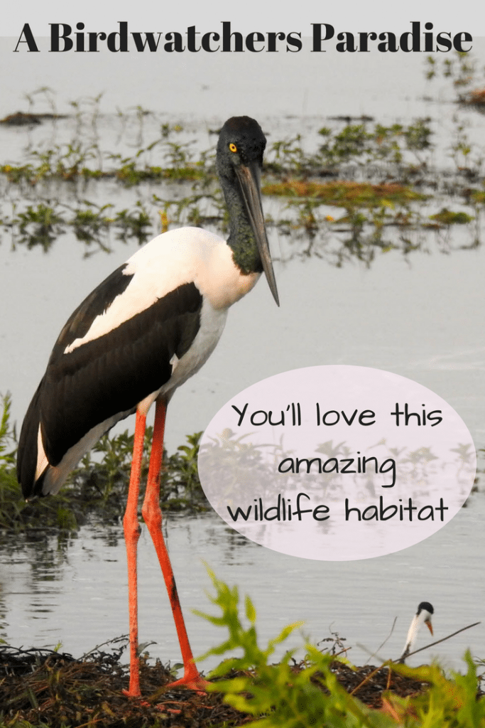 A Birdwatchers Paradise ! You'll love this amazing wildlife habitat - Jabiru