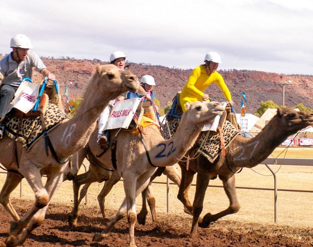 Camel Cup in Alice Springs