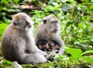 Ubud Sacred Monkey Forest
