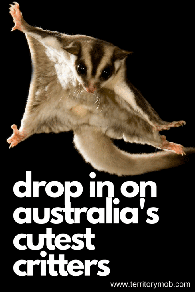 Drop in on Australias cutest critters