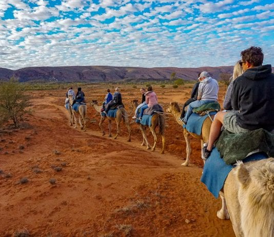 Camel Tour in Alice Springs