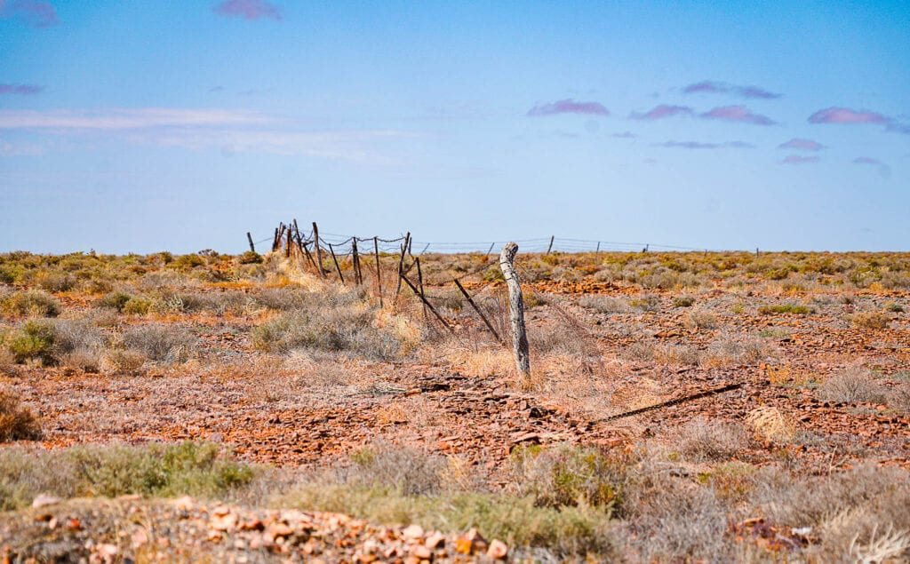 the Dog Fence South Australia